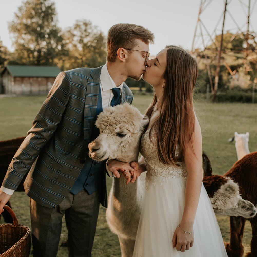 Sesja poślubna na farmie z Alpakami – Kasia i Marek